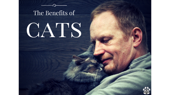 benefit of cats