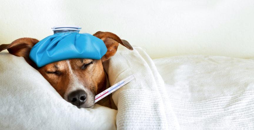 online pet first aid class