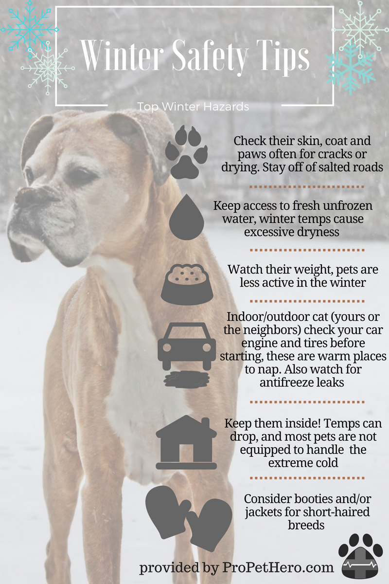 winter pet safety infographic