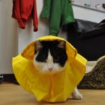 cat raincoat