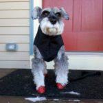 dog winter style
