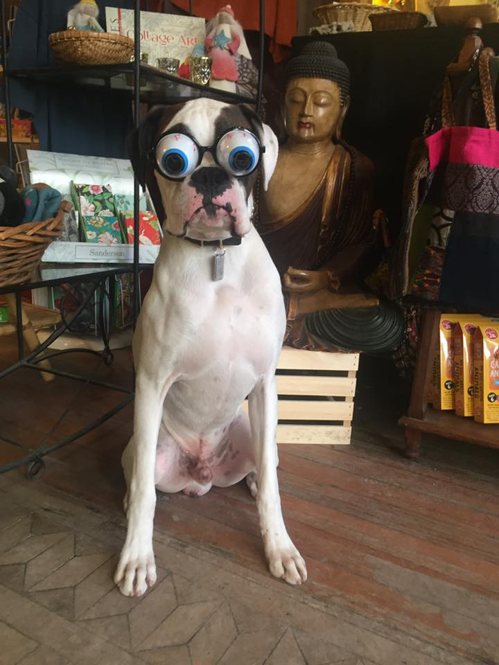 google-eyed dog