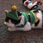 cat elf