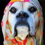 boxer wearing a hijab