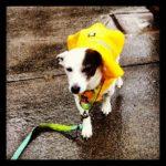 canine raincoat