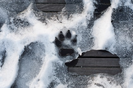 paw safe ice melt