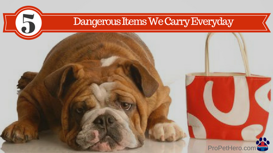 common dangerous items for our pets