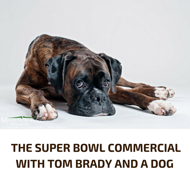 Tom Brady and the dog commerciall