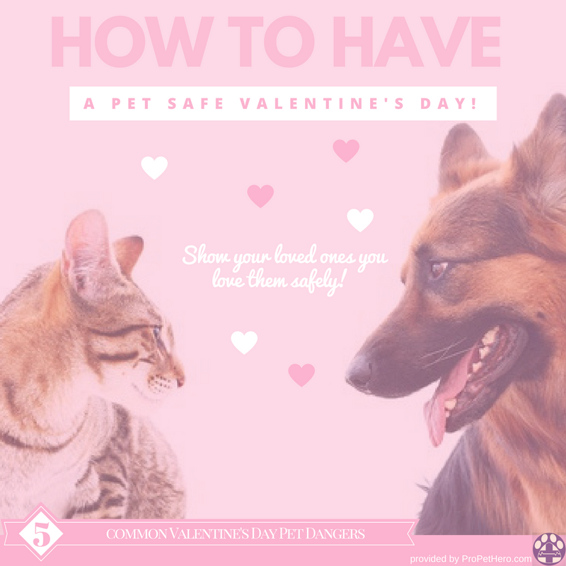 Valentine's safety for pets