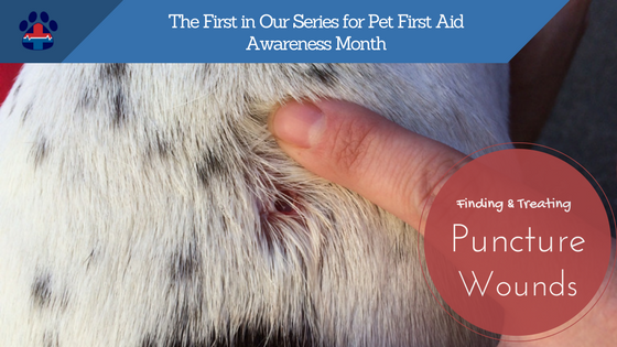 pet first aid awareness month start out with a puncture pro pet