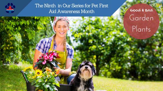 pet safe plants