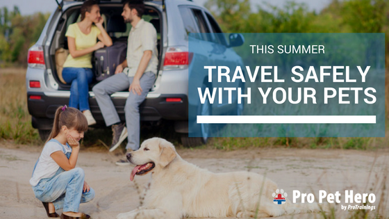 summer travel with pets