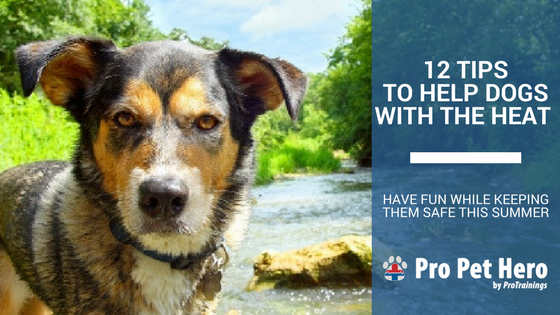12 tips to keep your dog safe in the heat