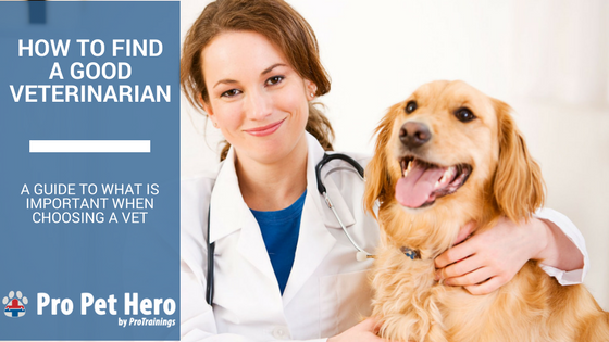 how to find a good veterinarian