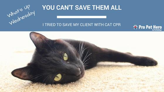 Cat CPR