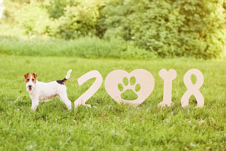 New Year's resolution with your pets