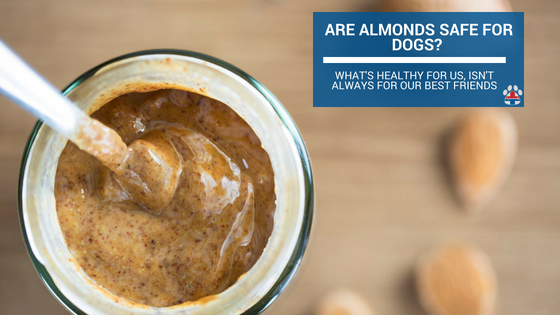Are almonds safe for dogs?