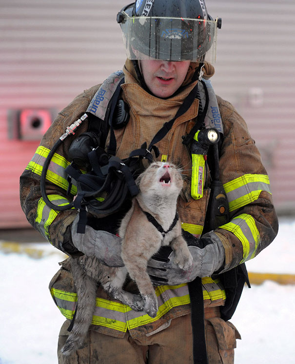 firefighter saves cat
