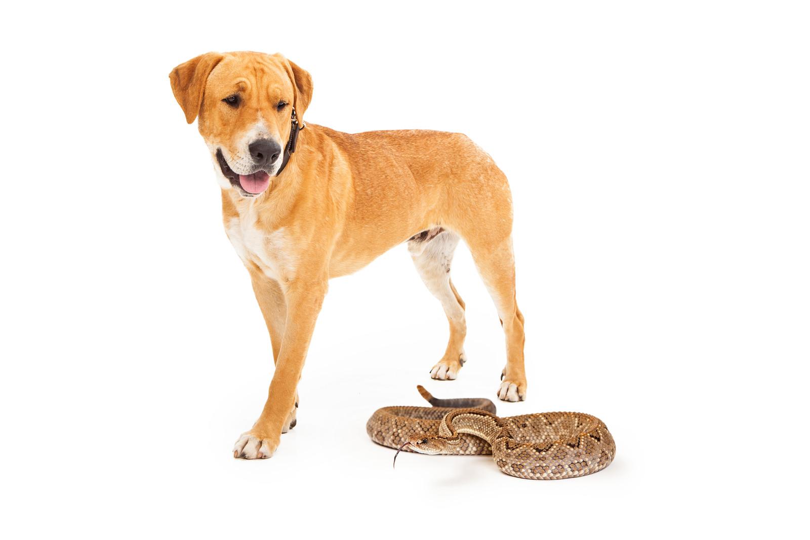 snake bite on pets