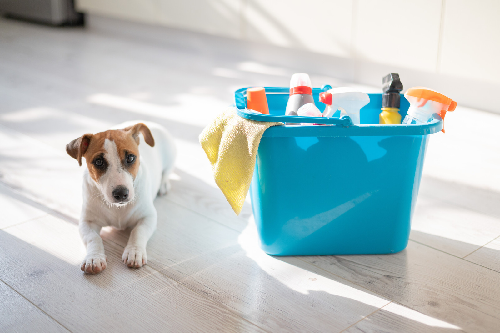 cleaning hazards for pets