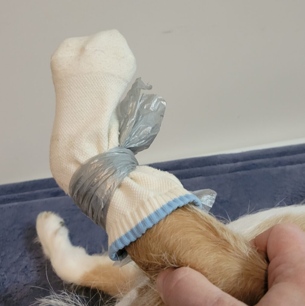 toe wound dog